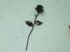 rózsa-01