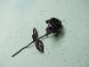 rózsa-02
