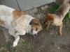 Lara és Pötyi