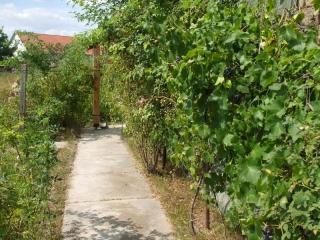 szőlő és vadrózsa