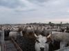marhák