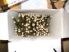 fűzfavesszők a dobozban