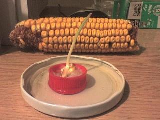 Kukorica - másfél hetes