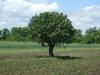fa az út mellett