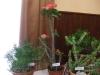 kaktusz-02