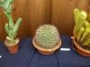 kaktusz-04