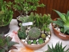 kaktusz-15