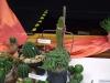 kaktusz-24