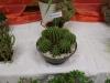 kaktusz-33