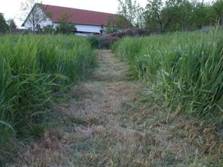 nagy fű