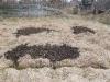 a kertbe hordtam a földet - tyúkól építés